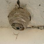 Как избавиться от ос и осиного гнезда на балконе?