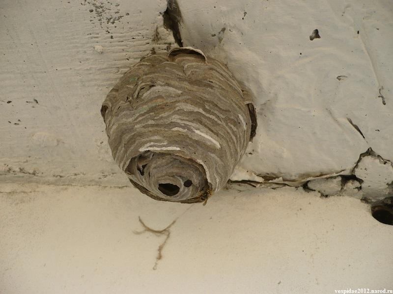 Как избавиться от осиного гнезда на балконе?